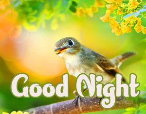 Cute Good Night Images