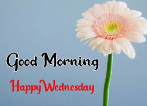 Cute flower Good morning happy wednesday images