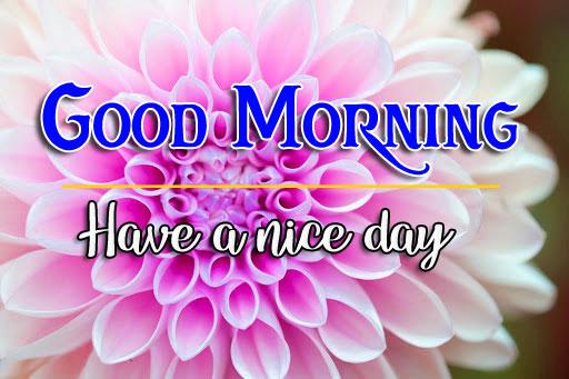 506+ Best Flower Good Morning Images Photo Wallpaper Download