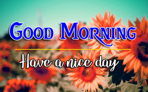 506+ Amazing Flower Good Morning Images Photo Download