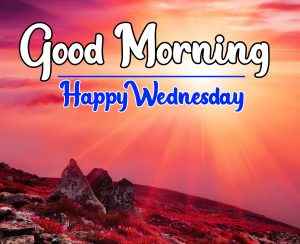 Flower good morning happy wednesday Hd