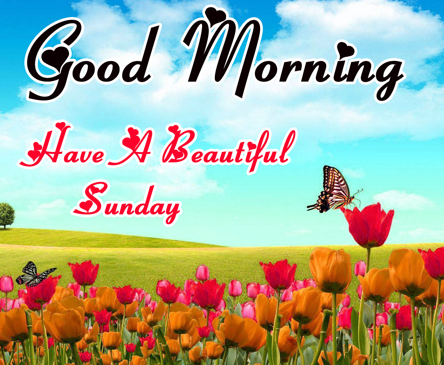 347+ Wonderful Good Morning Sunday Blessings Images HD Download