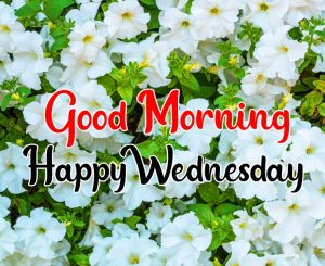 Good morning flower images happy wednesday images