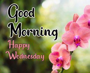 Light Orange flower good morning happy wednesday images
