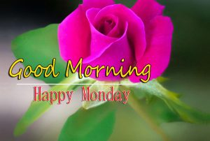 Monday Good Morning Images