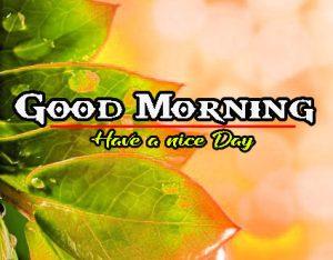 Nature Good Morning Wallpaper
