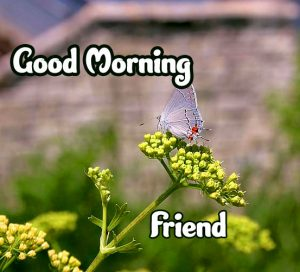 Special Good Morning Images Download