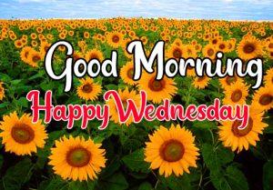 SunFlower good morning happy wednesday images