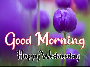 Tulip flower Good morning happy wednesday images
